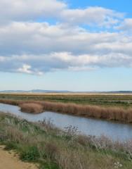 Laguna de la Janda (recorrido corto).