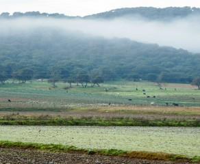 Laguna de la Janda (recorrido largo).