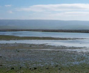 Marismas del río Barbate