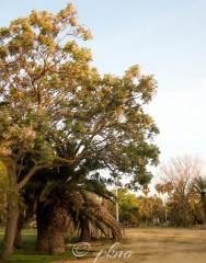 Parque Princesa Sofía